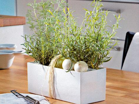 Bylinky v kuchyni – na úžitok aj okrasu