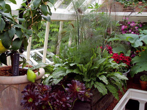 Vykurovaná zimná záhrada (1.)