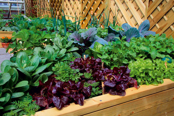 Zaujímavou formou pestovania sú vyvýšené záhony, kde možno na vrstvu kompostu naviezť záhradnícky substrát adoň sadiť rastliny. Obvykle je tu vyššia úrodnosť aaj starostlivosť otakéto záhony je menej náročná.