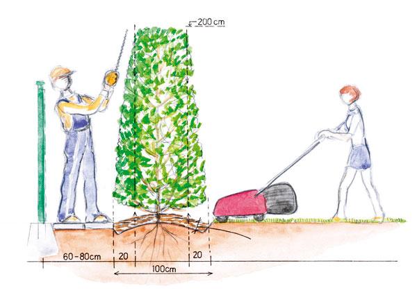 Priestor potrebný na bezproblémovú údržbu vysokého tvarovaného živého plota.