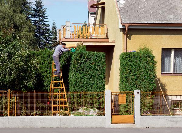 Tu nám plot pekne prerástol cez hlavu – jeho údržba by rozhodne nemala byť rizikovou prácou… V tomto prípade by určite postačil omnoho nižší.