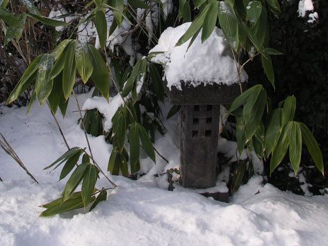 Zimná krása záhrady (1.)