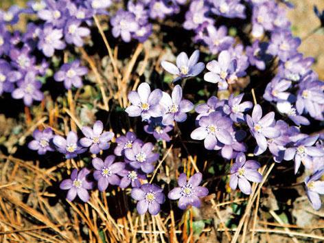 Marec – jarný čas v záhrade