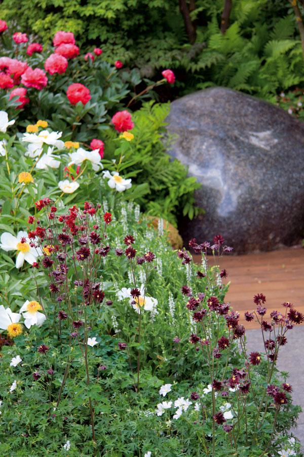 (Na obrázku vpopredí orlíček apôdu pokrývajúci pakost, za ním bielo kvitnúca veronika aniekoľko druhov pivónií spestrofarebnými avoňavými kvetmi.)