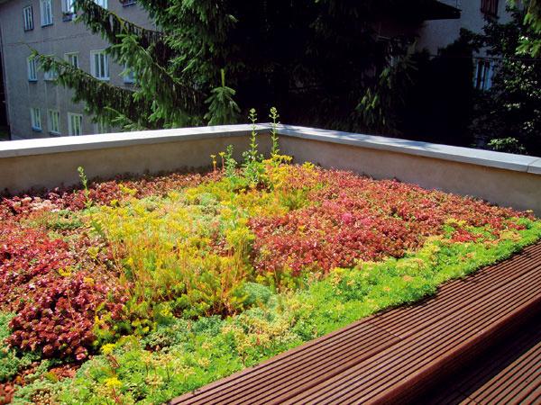 Extenzívna strešná záhrada si nevyžaduje pravidelnú starostlivosť. Keďže pri tomto type zazelenenia strechy stačí malá vrstva substrátu, je možné ju realizovať aj na starších objektoch, bez špeciálnej stavebnej prípravy. (foto: martes FLORA)