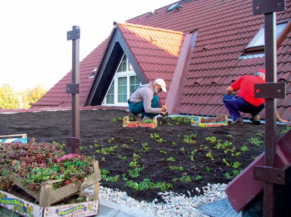 Realizáciu vegetačnej strechy zverte do rúk odborníkov.(foto: Bawaco)