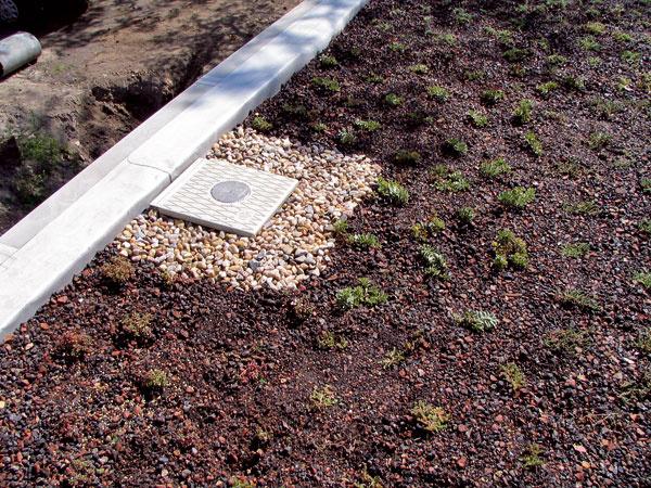 Strešný odtokový systém treba chrániť pred znečistením a zarastajúcimi rastlinami a na jeho kontrolu zabudovať nad strešným vtokom kontrolné šachty s poklopom. Ich úlohou je zabezpečiť kontrolu ohraničeného priestoru nad odtokom vody. Druh kontrolnej šachty závisí od výšky ozelenenia. (foto: Bawaco)