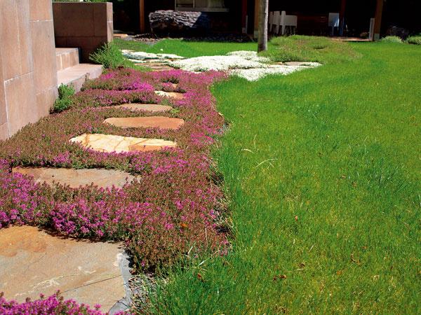 Pekný trávnik – zelené srdce záhrady