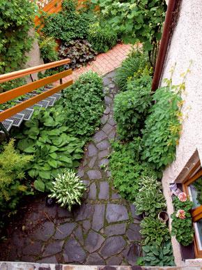 Chodník pri rodinnom dome je vydláždený sivomodrým andezitom alemujú ho tieňomilné trvalky. Prírodný kameň shrúbkou 5 až 7 cm sa ukladal do štrkového lôžka. FOTO: Lantana