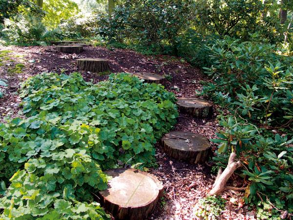 Vprírodnej časti záhrady sa dá vytvoriť zaujímavá cesta aj zdrevených klátov. Hodia sa na to trvanlivejšie dreviny, napríklad dub, slivka, čerešňa, borovica, smrekovec apodobne.