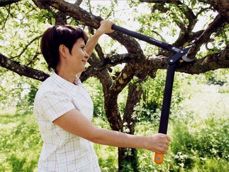 Správny strih arez – základ bohatej úrody apeknej záhrady