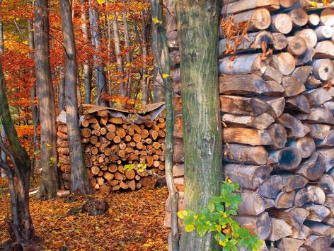 Obnoviteľné zdroje energie – biomasa  (2.)