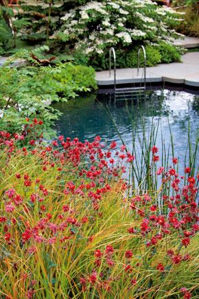 Bazén vo vidieckej záhrade môže zaujímavo doplniť aj farebne rozmanitá výsadba trvaliek akrov.
