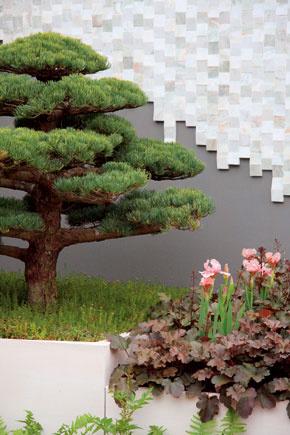 Vokolí bazéna sa môže pekne vynímať aj záhradný bonsaj či solitérny, pravidelným rezomtvarovaný ihličnan.