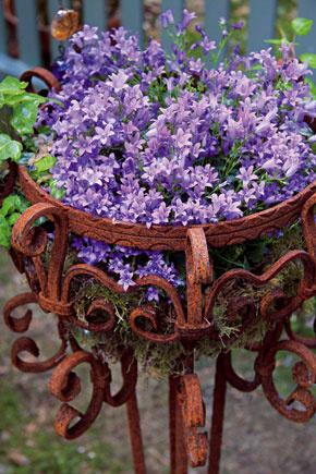 Kvitnúce letničky môžete na balkóne pestovať vaj závesných nádobách (tento spôsob je mimoriadne obľúbený vAnglicku či Írsku). Rastliny vyberajte podľa podmienok vášho balkóna – svetlo, tieň, polotieň. Bohato kvitnúce previsy vytvárajú surfínie, muškáty, železníky, bakopy, sanvitálie, vejárovky, dvojzubec aďalšie. Trendové sú zmiešané výsadby (tón vtóne, alebo napríklad kombinácia bielej, modrej, fialovej). Substrát vzávesnej nádobe rýchlejšie vysychá, preto ho častejšie zásobujte vlahou atakisto aj živinami.