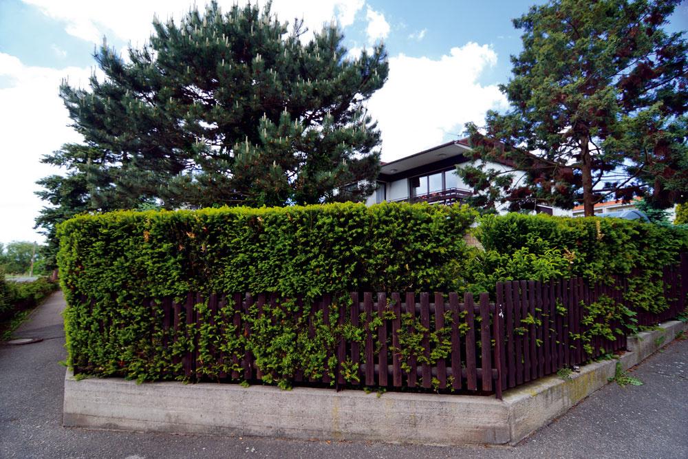 Záber z minulej jari. Dnes zakrýva pohľad do záhrady na rohu ulice tvarovaný živý plot z tisu. Už len málokto tak môže nahliadnuť do jej pôvabných zákutí.