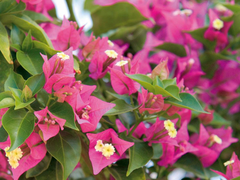 Tipy na JÚL pre záhradkárov