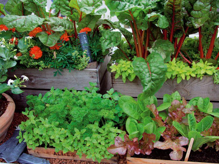 Záhrada v súlade s prírodou
