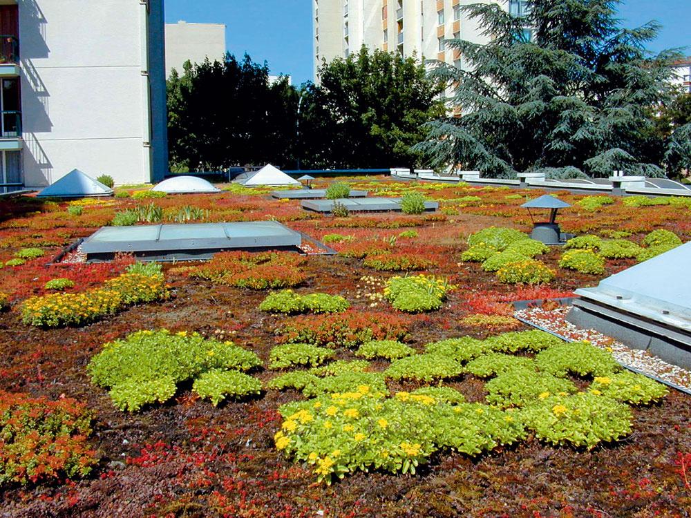Extenzívnu strešnú záhradu si možno naprojektovať aj na streche staršieho domu. Podmienkou je bezchybne zvládnutá hydroizolácia. Rastlinám sa darí aj v 6 cm vrstve substrátu.