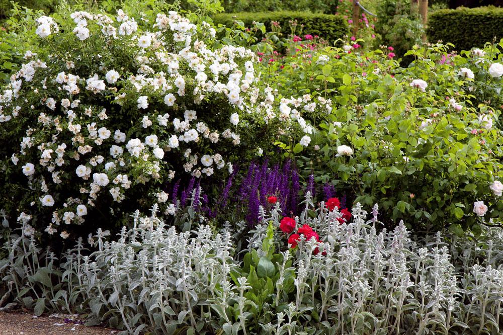 Na kvetinovom záhone, najmä ak je dostatočne veľký, nemusia mať domovské právo len letničky, trvalky či okrasné trávy. Veľmi pôsobivé je, ak sú vnich vysadené aj rôzne okrasné dreviny. Tie môžu prispieť nádhernými kvetmi – budleja, ibištek, ruže, nátržník, bradavec, dulovec, lykovec, ľubovník, trojpuk či vajgélia – alebo nápadne sfarbenými listami  – drieň (Cornus alba 'Sibirica Variegata'), škumpa (Cotinus coggygria 'Royal Purple'). Najlepšie je vysadiť ich skoreňovým balom niekde do stredu alebo pozadia záhona, pričom im treba nechať dostatočný priestor, aby sa mohli pekne rozrásť apriniesť želaný efekt.