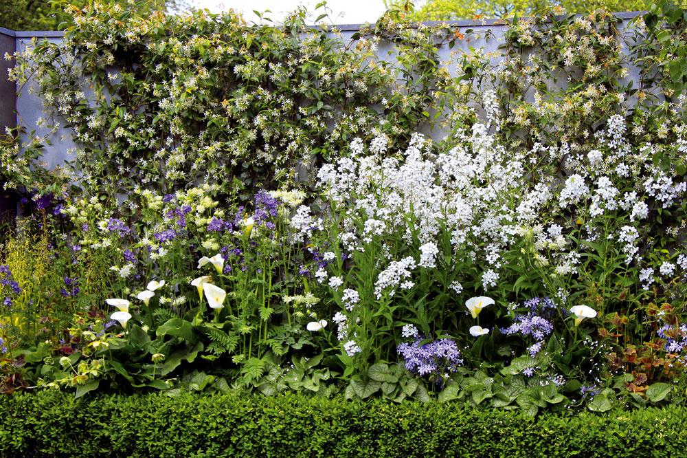 Záhradu oddeľuje od okolia vysoký sivý múr. Účinne ho zjemňujú bielo amodro kvitnúce rastliny – biela záplava kvetov na snímke patrí aromatickej večernici, elegantnými kvetmi zapôsobí kornútovka.