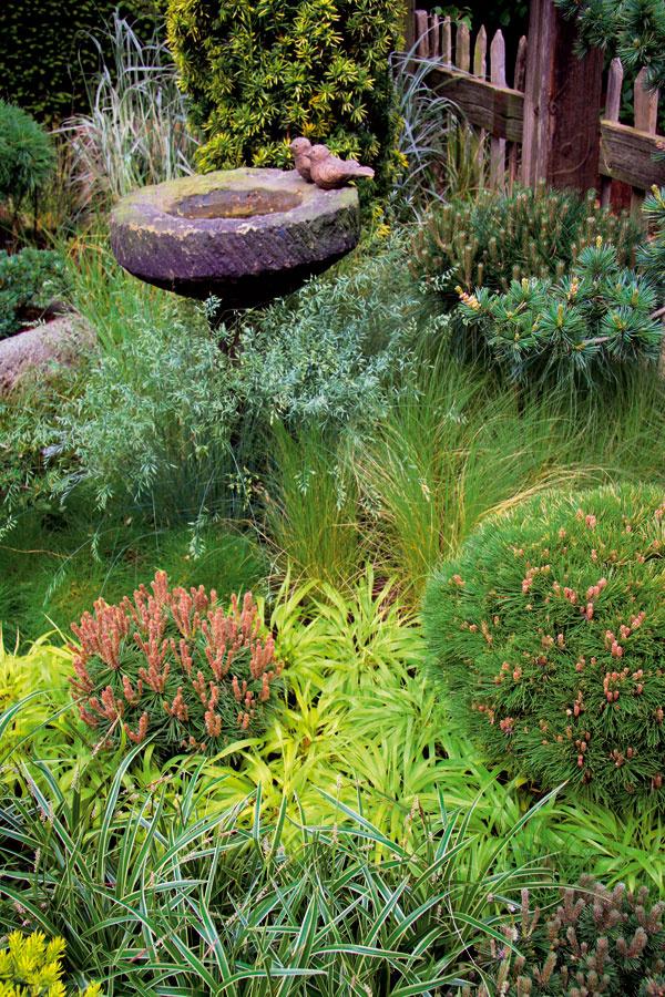 Tip do záhrady: Miniatúrne ihličnany Vtomto období si môžete do záhrady vysadiť nové druhy ihličnanov –trendové sú hlavne miniatúrne akompaktné rastové formy. Saďte ich vdňoch, keď je pod mrakom, vždy len skoreňovým balom ana miesto smierne kyslou pôdou.