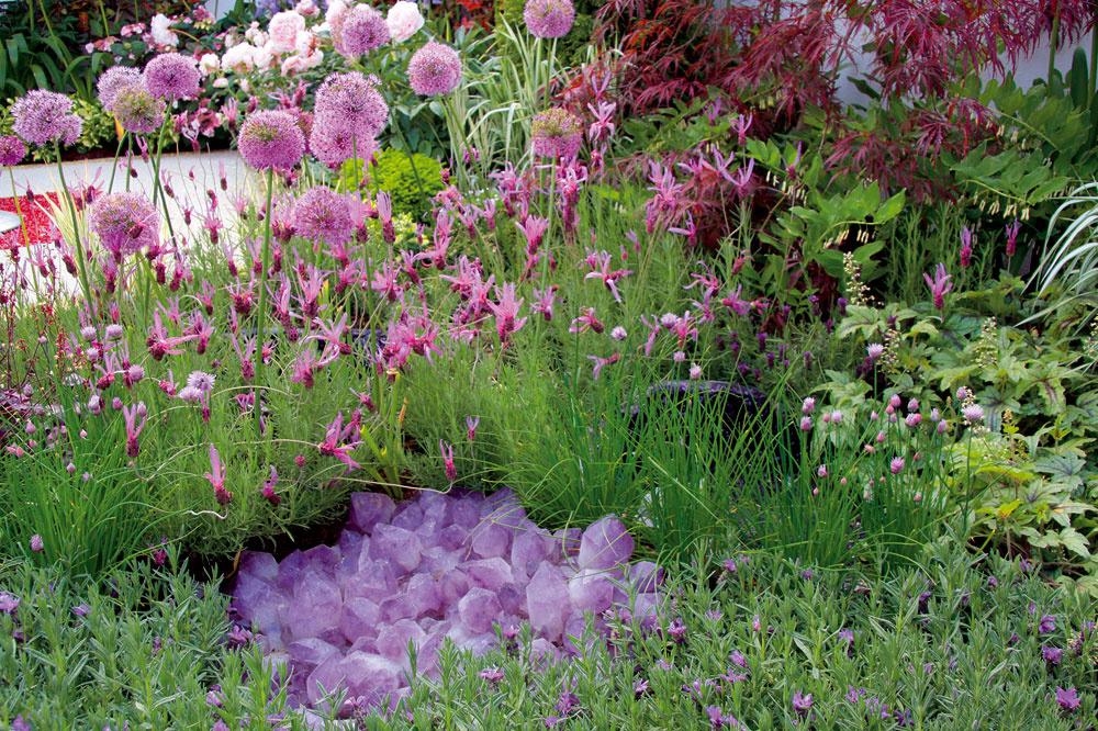 Nádhernou atypickou vôňou vyniká levanduľa. Je jej niekoľko druhov adá sa snimi zaujímavo experimentovať aj vmoderných záhradách.