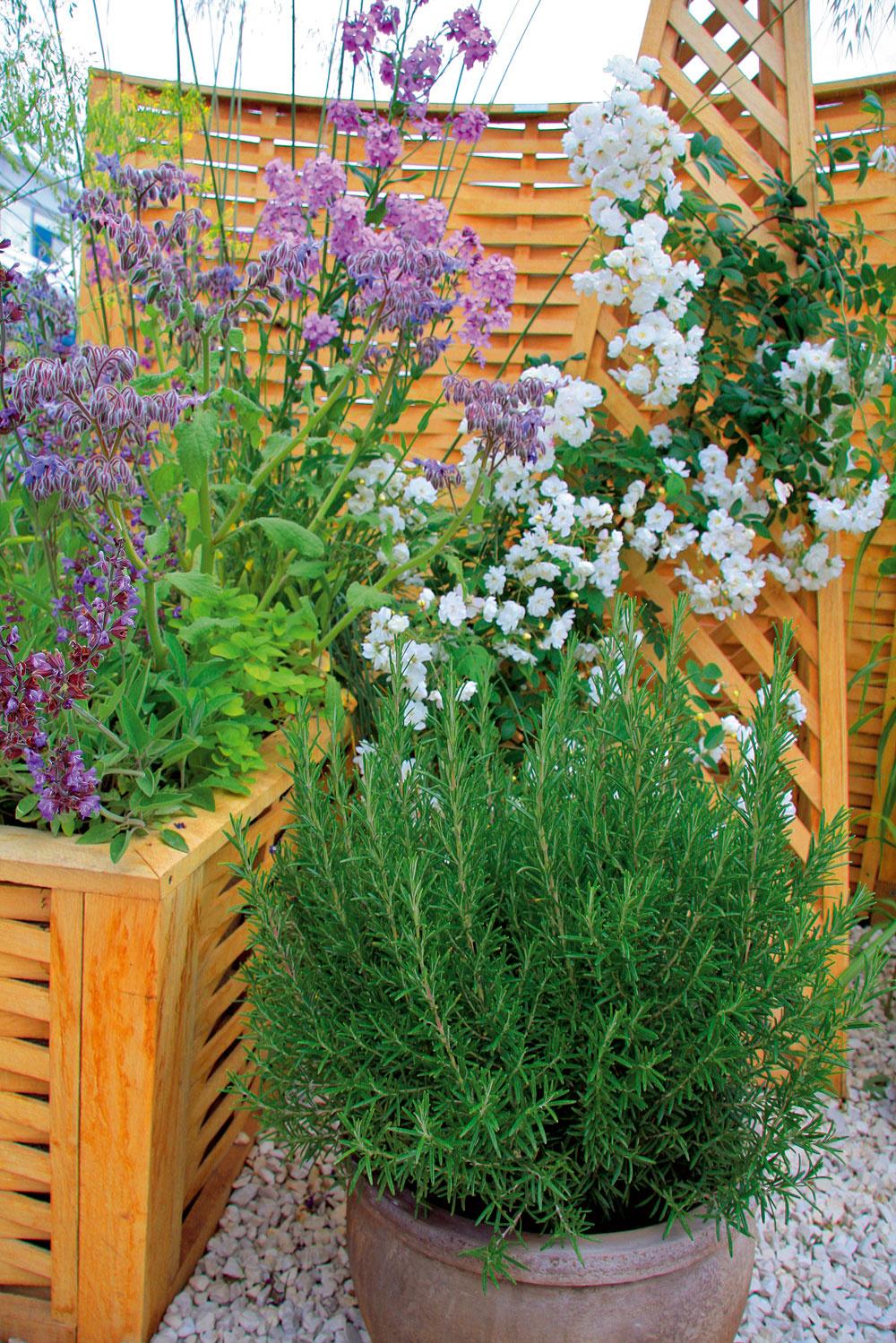 Voňavé rastliny sa dajú bez problémov pestovať aj vnádobách na balkónoch aterasách. Obvykle si nežiadajú žiadne špecifické pestovateľské zásahy. Na tento účel sa výborne hodí rozmarín, ale aj popínavé ruže.
