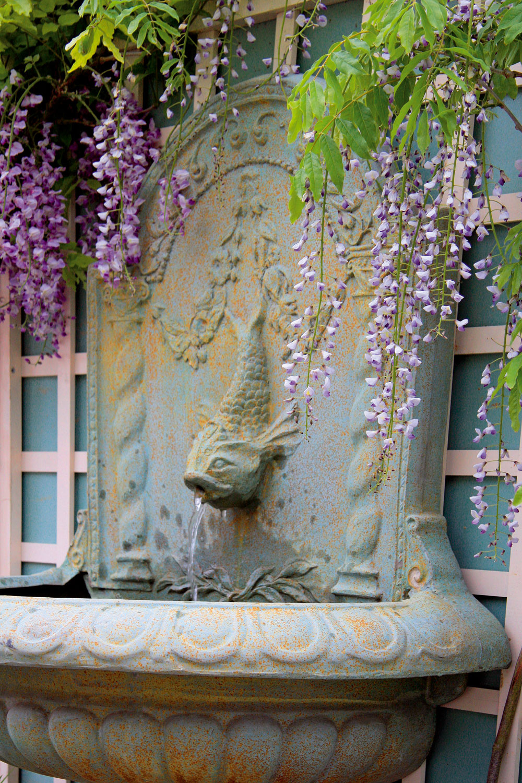 Pod sladko voňajúcimi kvetmi vistérie sa vám bude v máji príjemne sedieť, táto popínavá rastlina však môže vytvoriť aj pekný rám pre záhradné umývadlo alebo vodný chrlič v  altánku.