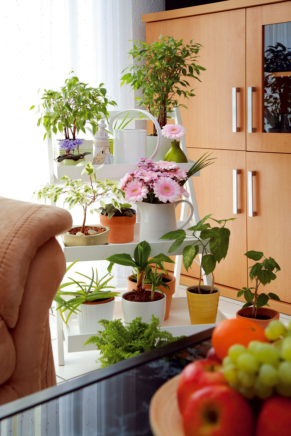 Bytové kvety sú zdrojom alergénov, najmä tie kvitnúce. Do bytu alergika nepatria.