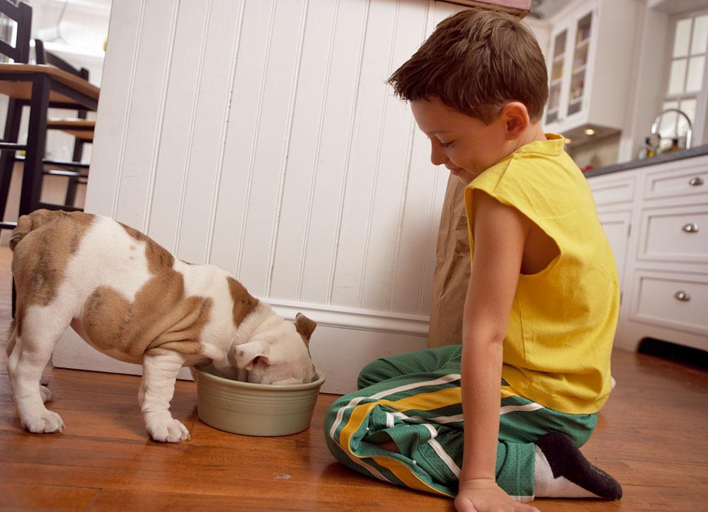Psy, mačky, škrečky, morské prasiatka, domáce králiky či vtáky sú zdrojom agresívnych alergénov, ktoré sa nachádzajú vlupinách, slinách, výlučkoch. Srsť nie až taká podstatná, pretože aj krátkosrsté psy sú zdrojom alergií. Najväčší problém spôsobuje mačka. Ak sa svojho domáceho miláčika nevzdáte za nič na svete, treba ho často kúpať ačistiť všetko, sčím prichádza do styku.