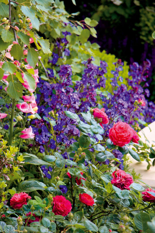 Vzáhonoch (nemusia byť veľmi pravidelné ani precízne upravené) by určite nemali chýbať ruže aspolu snimi ani ďalšie typicky vidiecke trvalky ako orlíčky či stračie nôžky. Rozhodne sa pritom netreba obávať ani sýtejších farieb.