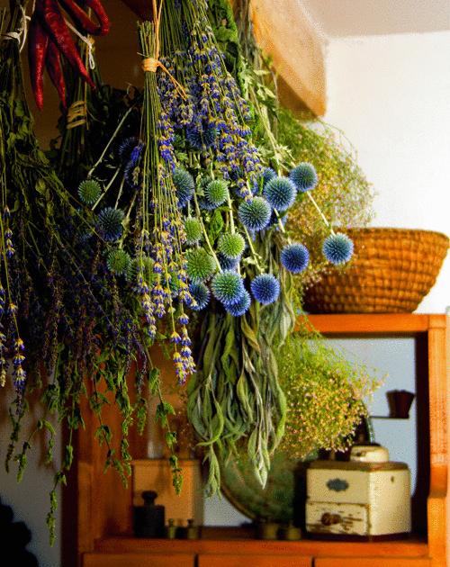 Lúka v byte. Stačí zviazať do kytičiek, zavesiť dolu hlavičkami a vôňa letnej lúky sa stane sprievodcom vášho interiéru i počas sychravej jesene. Čarovná moc byliniek vytvára v byte liečivý kútik na úžitok i okrasu. (foto: Dominik Vlaheko)