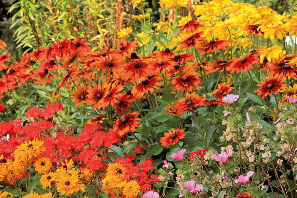 Steblá okrasných tráv atrvalky (napríklad rudbekie či rozchodníkovce) nestrihajte – poslúžia ako zimná dekorácia. Odstráňte ich až na jar.