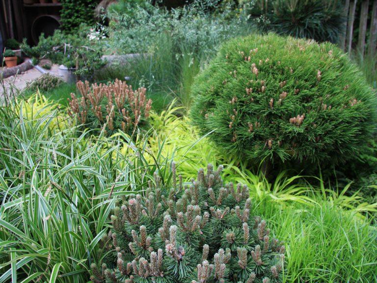 Miniatúrne ihličnany vo vašej záhrade