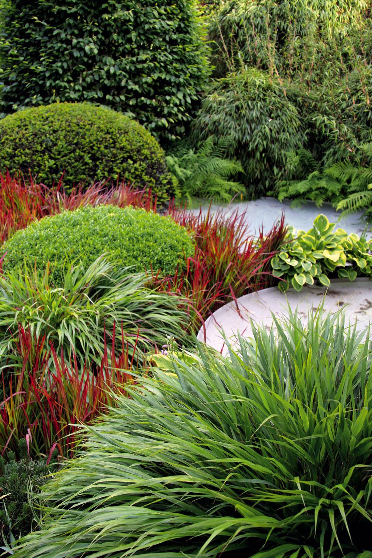TIP do záhrady: Namiesto kvetov listy Moderná záhrada môže mať rôzne podoby. Nie vždy pritom musia byť jej súčasťou pestré kvetinové záhony či kvitnúce kry astromy. Ak ich vymeníte za úplne iné rastliny, celý priestor bude pôsobiť inak – pokojne aharmonicky, možno nevšedne aurčite príťažlivo. Pohrať sa môžete napríklad svýberom rastlín srôznymi atraktívnymi listami – môžu to byť trvalky, papraďorasty, trávy, bambusy aj vždyzelené kry. Kompozíciu treba vyskladať tak, aby bola vkaždom ročnom období niečím zaujímavá, ajednotlivé prvky arastliny je dobré niekoľkokrát zopakovať. Namieste je pritom striedmosť, ktorej sa treba držať aj pri farbách – radšej menej avýraznejších. Do záhrady bez kvetov ich dokážu vniesť viaceré trvalky sokrasnými listami či farebné trávy (na obrázku červenolistá imperáta).