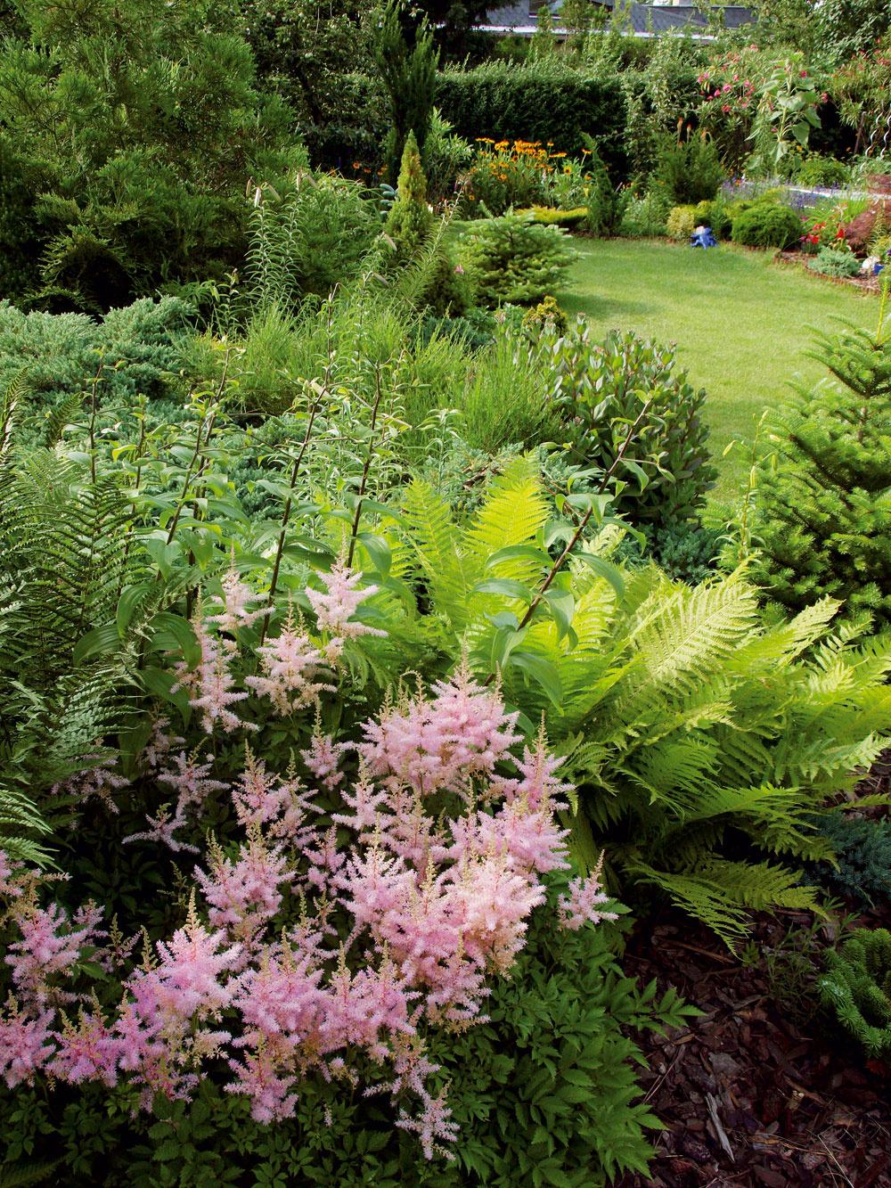 Tóny zelenej atvary listov vtieni pod stromami, medzi vždyzelenými krami aihličnanmi, ozvláštňuje jemnou ružovou subtílna astilba 'Erika'. Ak sa jej darí, vie sa vytiahnuť aj do výšky jedného metra. Miluje vlhko apolotieň, atak je jej skvelým záhradným partnerom papraď, nazývaná aj čertovo rebro. Táto prastará rastlina akoby sa na istý čas zo záhrad vytratila, no vposledných rokoch ju ľudia znovu objavili pre atraktívny tvar jej rebrovitých listov apomerne skromné nároky na životné podmienky. Legendárna, večne zelená papraď nikdy nekvitne – množí sa výtrusmi.