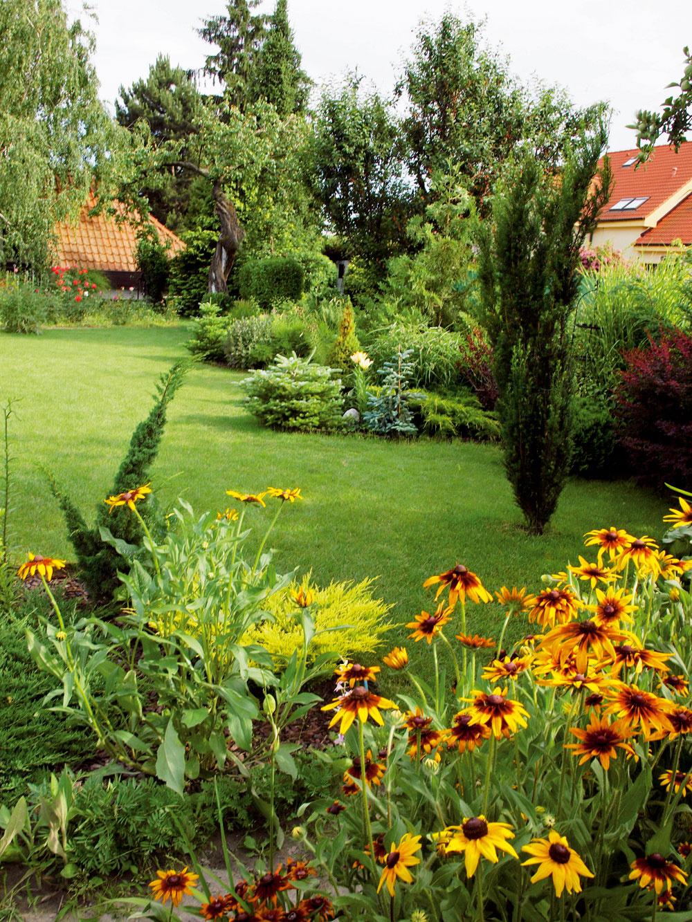 Časť záhrady na slnečnom mieste oproti domu patrí rudbekiám. Pre svoju vytrvalosť anápadné slniečka kvetov sa vnašich záhradách tešia veľkej obľube, liečivé schopnosti rudbekií však poznali už Indiáni vich pôvodnej domovine, vSevernej Amerike. Zmnohých druhov je najpopulárnejšia echinacea purpurová, ktorú stúpenci prírodnej medicíny považujú za hotový poklad