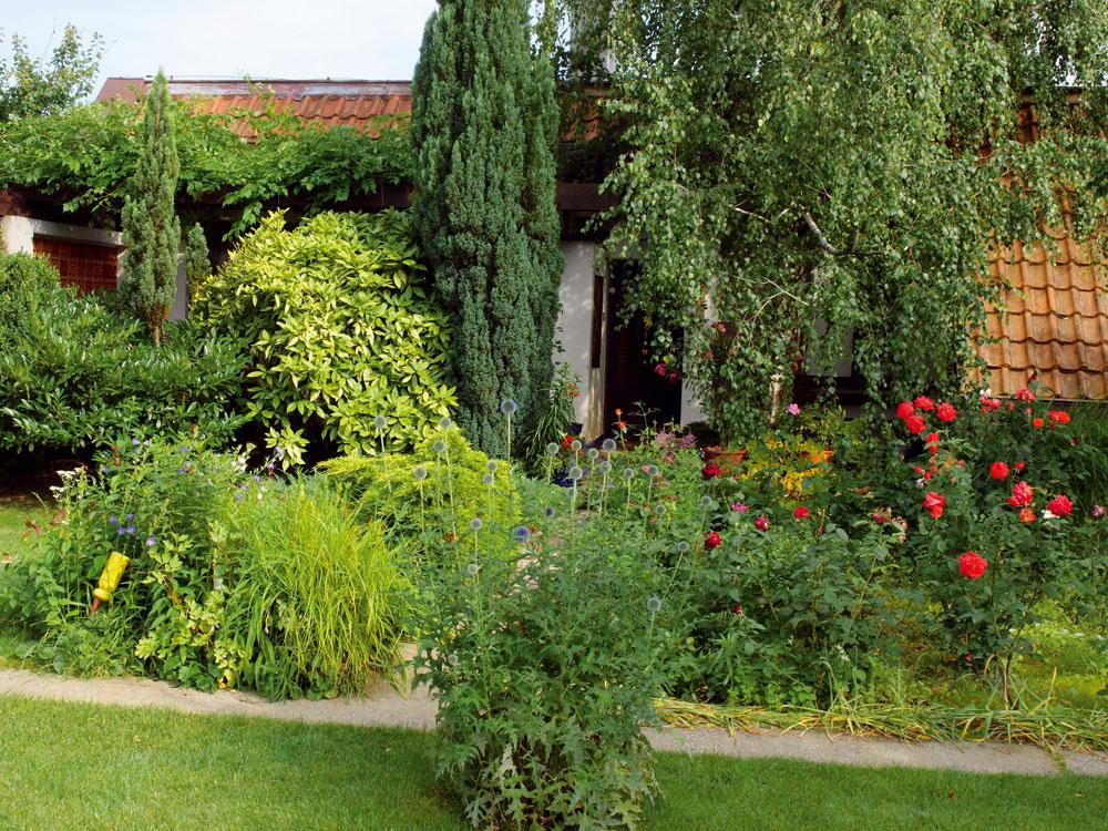 Prízemný dom sa takmer stráca vzelenom spoločenstve rastlín. Oprvý dojem sa tu starajú najmä ruže, ktoré sú tou najkrajšou pozvánkou do záhrady, ale aj rozlúčkou sňou. Červená je azda ich najvlastnejšou farbou, ktorou si ruža získala miesto vmnohých mýtoch apovestiach, vdojímavých legendách aj historických príbehoch. Stala sa najkrajším symbolom lásky, ale aj mučeníckej krvi, zmyselnosti adokonalosti. Bielu ružu ovenčili ľudia povesťou čistoty, nevinnosti aradosti, modrá znamená vernosť, ružová bolesť, žltá moc... Ruža vktorejkoľvek zo stoviek svojich podôb je však predovšetkým krásna. Za tisícročia sa tento pohľad na ňu nezmenil. Dosiahla tak postavenie, aké nemá žiadny iný kvet – je ich kráľovnou.