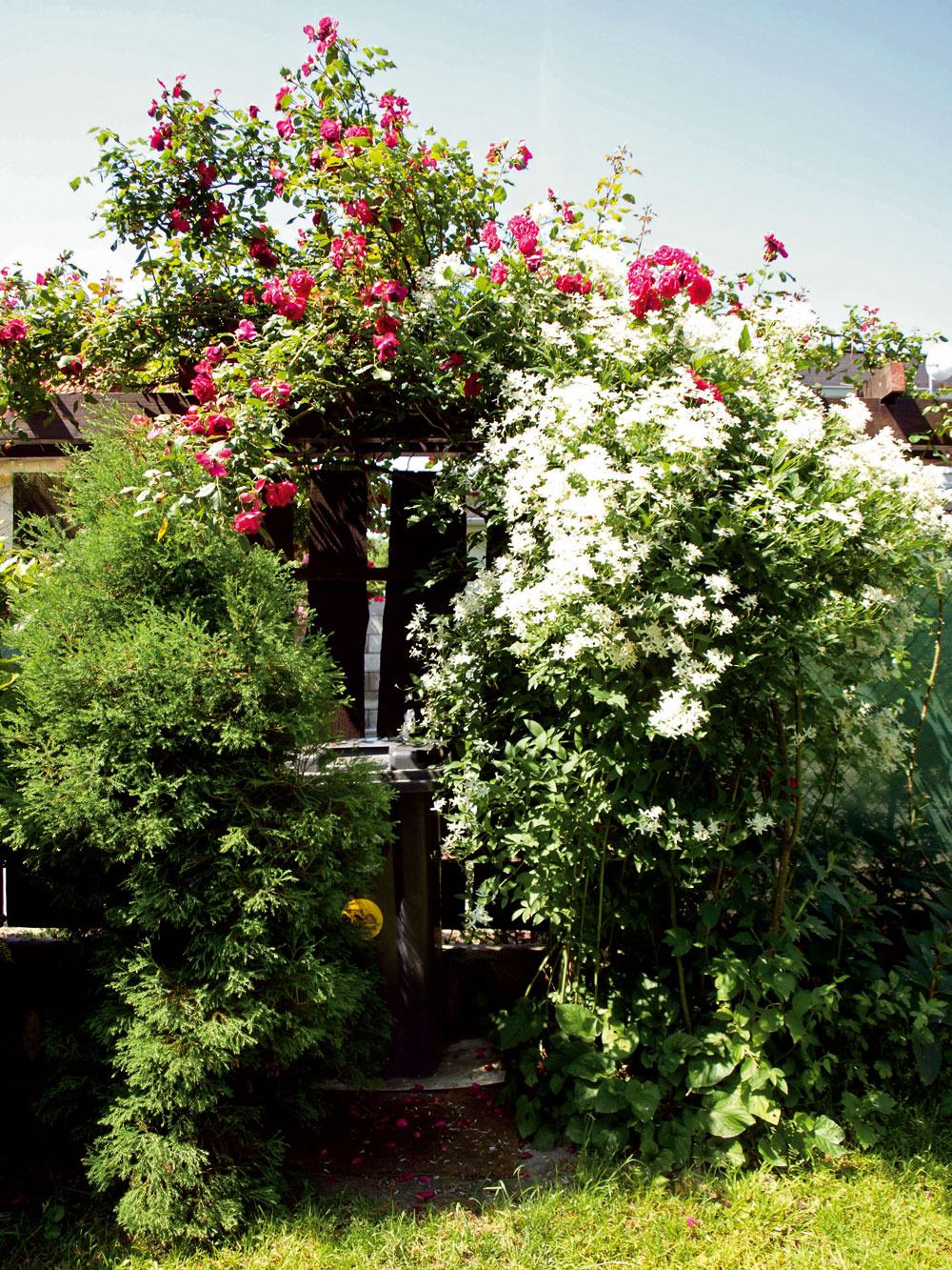 Ani smetný kôš vedľa bránky, skrytý pod popínavými ružami abielym jazmínom, nenarúša záhradnú harmóniu.