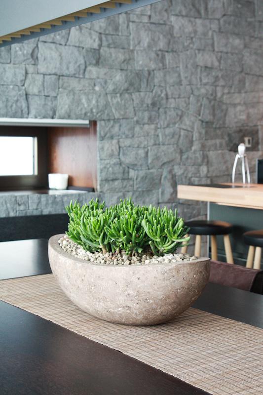 Interiérovým rastlinám sa opäť zelená na lepšie časy