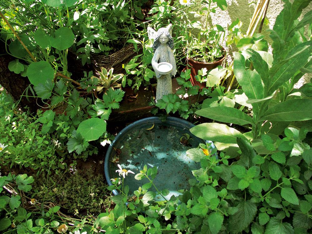 Tým najmenším vodným prvkom vhodným do každej záhrady sú vtáčie napájadlá. Sledovať vtáčiu hygienu vnich je vždy pohladením pre dušu. Spokojná drozdica si dokonca postavila hniezdo kúsok za kúpeľňou vmodrom napájadle.