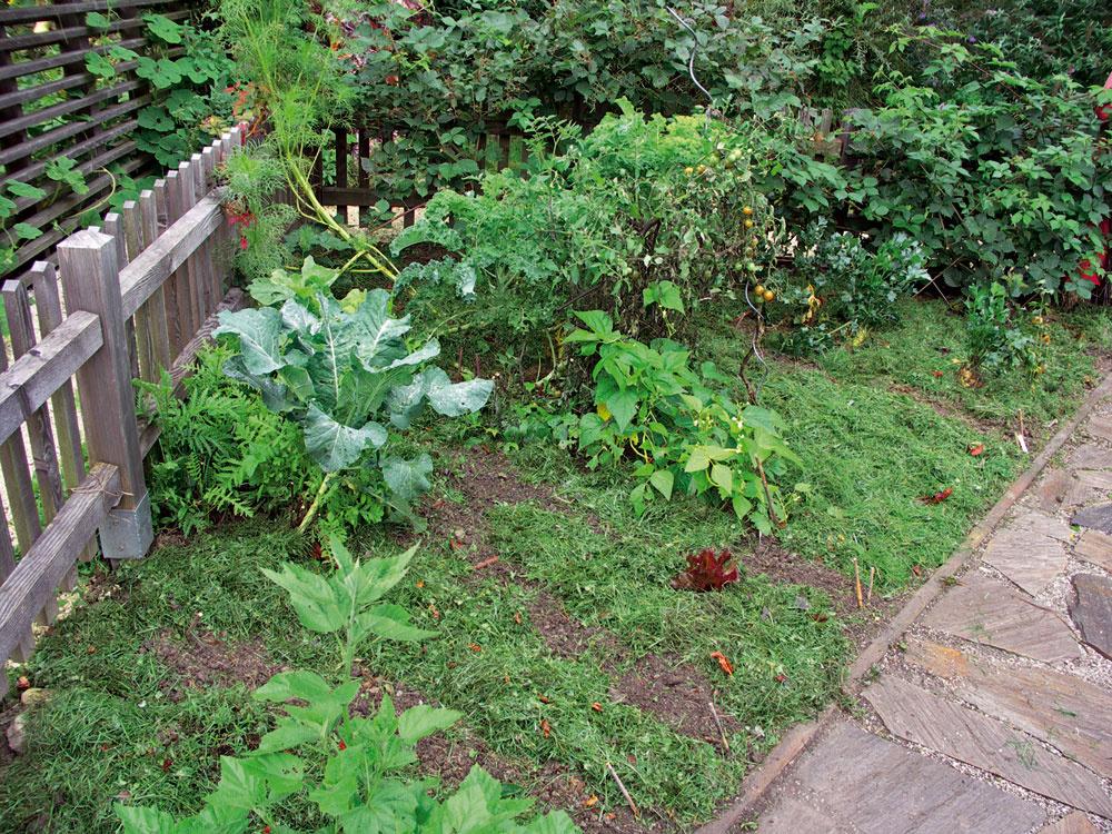 Zeleninový záhon smulčom zpokosenej trávy. Aby tráva neplesnivela, musí sa položiť len vtenkej vrstve, alebo predsušiť.