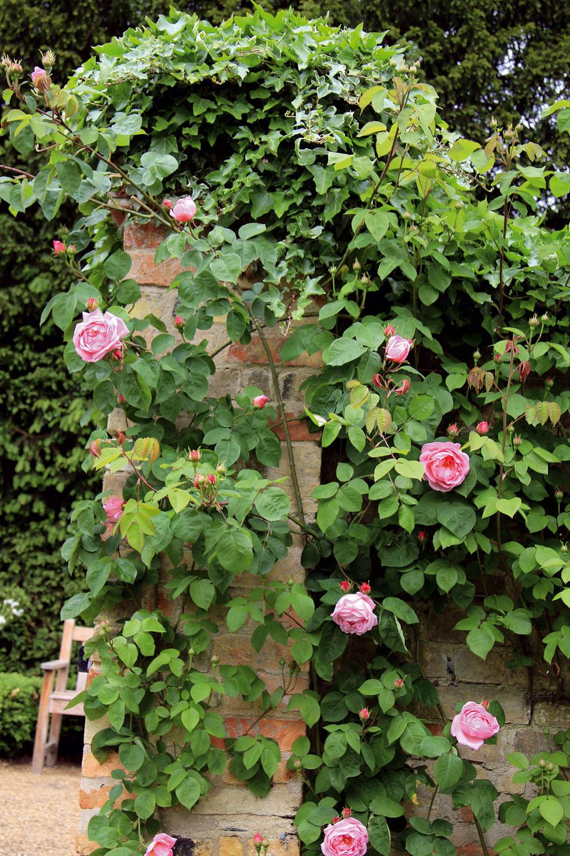Slnečné miesta sú ideálne pre popínavé ruže. Vponuke sú aj kultivary, ktoré majú voňavé kvety.