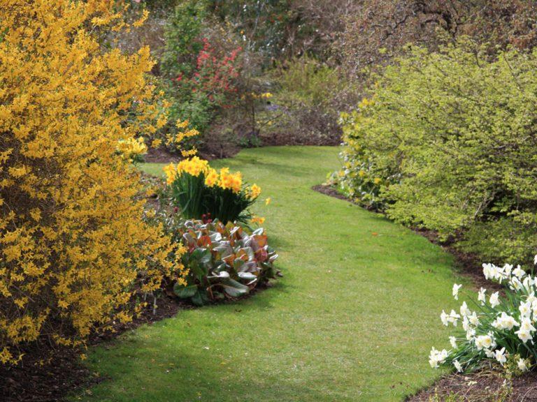 Tipy na marec pre záhradkárov