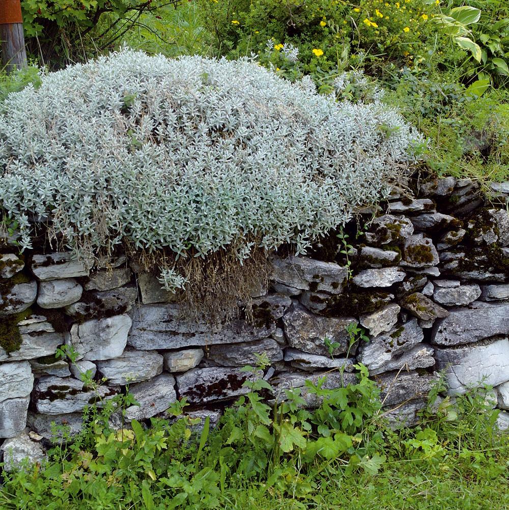 Najkrajšie spevnené svahy vzniknú vtedy, keď jemné rastliny vytvoria kontrast stvrdým apevným kameňom. Prevísajúce druhy sú osvedčenou ozdobou múrov, či už je to rožec plstnatý (Cerastium tomentosum), nenáročná skalnička, ktorej vyhovuje sucho aslnko, alebo pôdopokryvné či poliehavé kry ako napríklad skalník (Cotoneaster).
