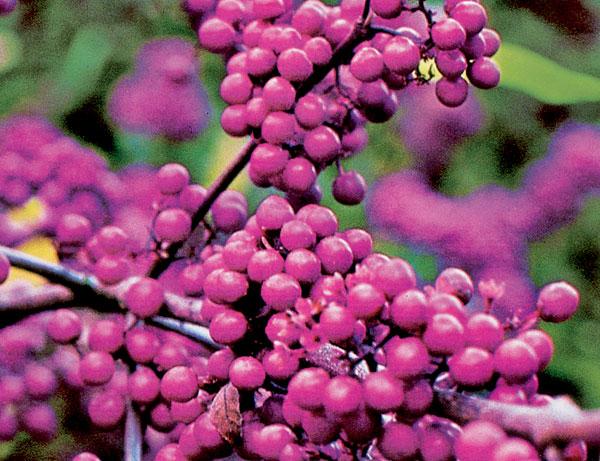 Farebné šperky jesene