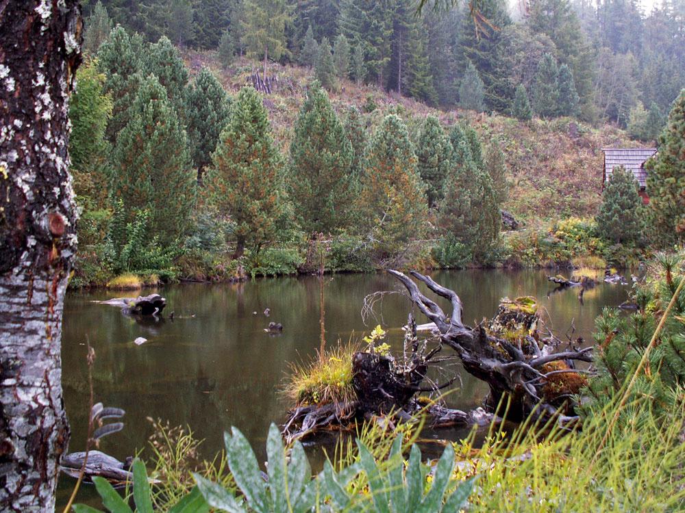 Drevo zvyrúbaných stromov sa zväčšej časti využije na modelovanie terás. Slúži ako ich podpera asúčasne zospodu ohrieva pôdu akorene rastlín. Časť koreňov akmeňov sa stala súčasťou umelo vybudovaných jazier, močiarov atôní, ktoré zabezpečujú, že voda ostáva na pozemku apriebežne zavlažuje okolie.