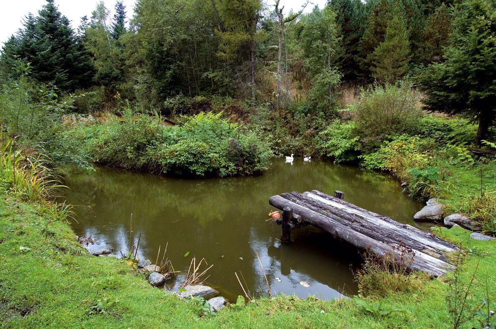 Jedno zmnohých jazier, ktoré zadržiavajú vodu vo svahu, asú biotopom pre množstvo rýb – obľúbený produkt Krameterhofu.