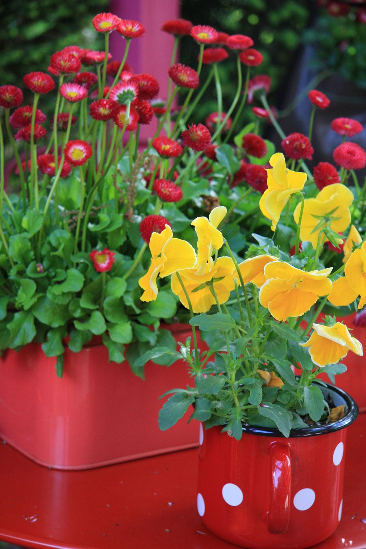TIP na balkón:  Kvety sa vojdú všade Pri jarnom upratovaní iste nájdete rôzne dózy, plechové škatuľky či staré hrnčeky. Nevyhadzujte ich adajte im ďalšiu šancu. Natrite ich farbou avysaďte si do nich napríklad sedmokrásky, nezábudky či sirôtky. Ak vysádzate priamo do nádob, musia mať na dne otvor na odtok prebytočnej vody. Výsadby umiestnite na slnečné miesto audržujte ich stále mierne vlhké.